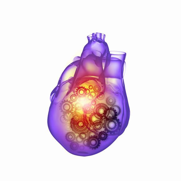 Сердце, живущее само по себе